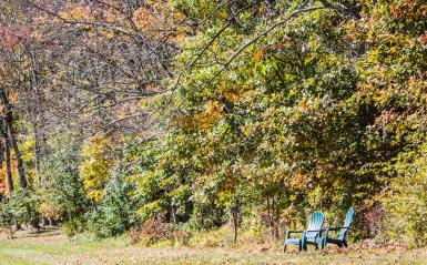 Two lawn chairs in a wooded field