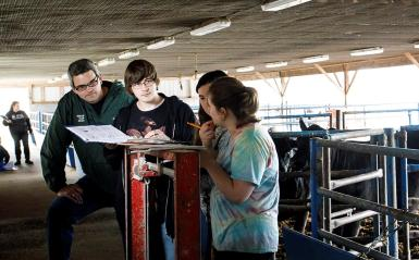 Students working with cows in a barn.