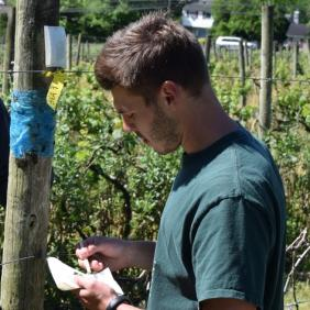 Austin Wilson conducts spotted lanternfly research with Dr. Chris Tipping, a faculty member from Delaware Valley University, at Vivat Alfa, a Bucks County, Pennsylvania vineyard.