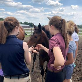 Students working with a foal.