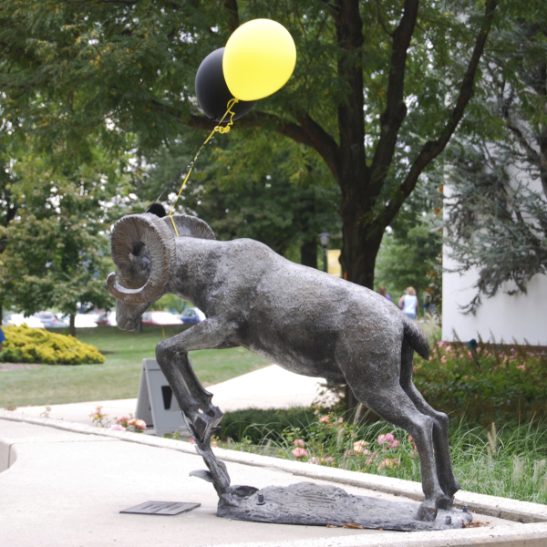 A statue of Delaware Valley University's mascot, a ram, has a festive gold balloon attached to it on Move-In Day.