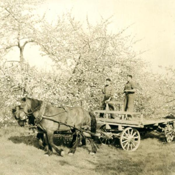 A early photograph of senior students in horticulture drive through a blossoming orchard.