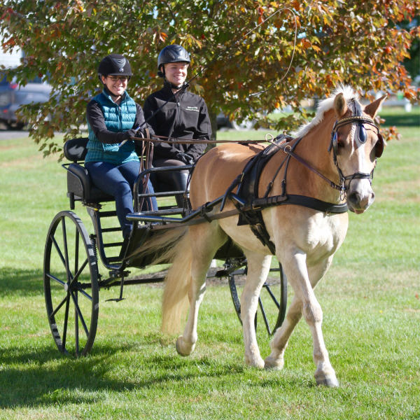 Two carriage club members on a ride with a horse