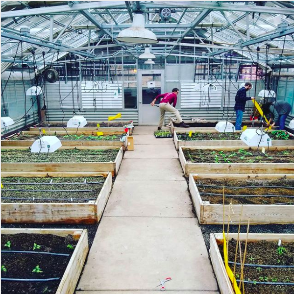 The commercial vegetable production class at work in the greenhouse