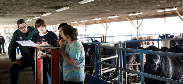 Students working with a professor in the barn with cows in the background.