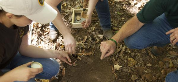 Students and professor examining leaves and collecting samples