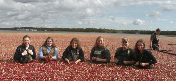 A small group of college-aged students standing in a cranberry bog.