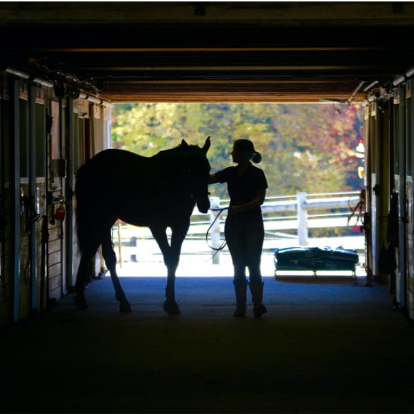A female rider and horse in silhouette walking in a barn.