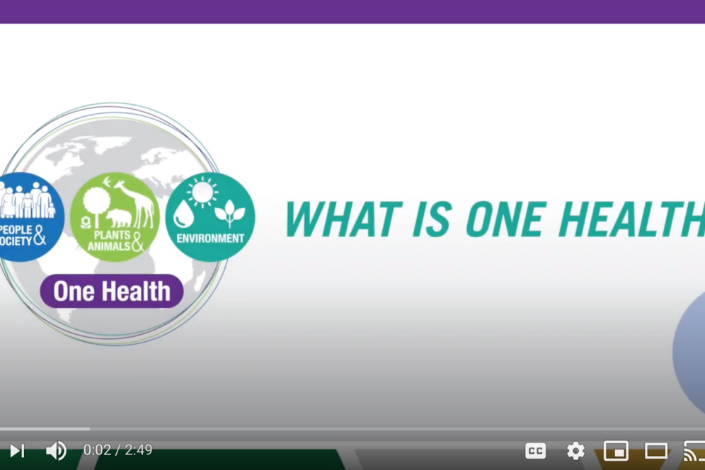 In this video by Michelle Glitzer '20, students, faculty and staff on campus explain what the term One Health means and, why this concept is so important for the future of our world.